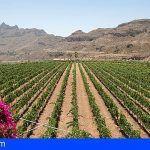 El Mundial de Vinos Extremos de Italia premia los vinos de Gran Canaria