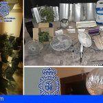 Incautadas 86 plantas de marihuana en Lanzarote