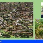 La Forastera Gomera: un referente en la vides canarias