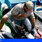 Canarias. 5,68 millones de euros para la comercialización y transformación de la pesca y acuicultura
