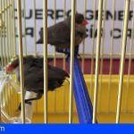 La Policía Canaria incauta cuatro ejemplares de aves incluidas en el Catálogo de Especies Exóticas Invasoras
