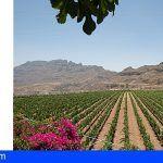 El vino grancanario Valara de la Bodega Tunte obtiene la Medalla de Plata Muscats du Monde