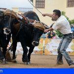 El Gobierno de Canarias apoya con 100.000 euros los concursos de arrastre de ganado