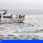 Hay que buscar una solución urgente y eficaz al avistamiento ilegal de cetáceos