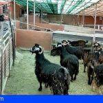 La producción de leche de cabra y oveja aumentó en Canarias un 21% y la de carne un 19% de 2015 a 2017