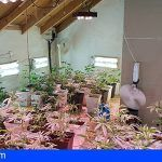 Intervienen en El Hierro más de 200 plantas de marihuana en una vivienda con finca