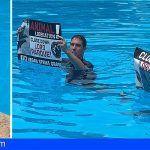 Loro Parque denuncia que activistas radicales ponen en grave peligro a los delfines del parque
