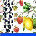 Las siete frutas que debes incluir en tu dieta para tener una piel radiante