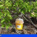Gran Canaria entrega más de 2.800 mosqueros para el control de la mosca de la fruta y 47 litros de insecticida ecológico