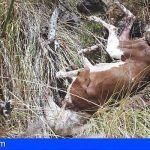 Mató un perro con una azada en un barranco de El Rosario en Santa Cruz