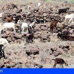 Nuevo curso en La Gomera de transporte de animales dentro de la Agenda Formativa del sector primario