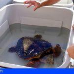 Tenerife. Atienden a más de 900 animales en La Tahonilla durante el primer semestre del año