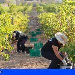 Tenerife mantendrá su producción de uva en los niveles y con la calidad de la cosecha del 2017