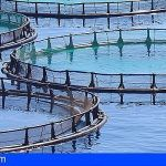 El 36,09% de la producción de pescado fresco en Canarias proviene de la Acuicultura