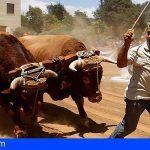 El Gobierno canario destina 100.000 euros al cruel arrastre de ganado