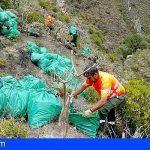 Retiran en Tenerife más de 16.000 kilos de residuos vegetales de especies exóticas invasoras