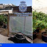Intervienen 2.159 plantas de marihuana en Lanzarote y detiene a cinco personas