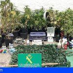 Incautan 96 plantas de marihuana en una vivienda ubicada en Barranco Hondo