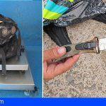 Sorprenden a dos hombres mientras capturaban ilegalmente 18 kg de lapas en un paraje de La Palma