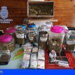 Tres detenidos en el Sur de Tenerife por tráfico de drogas cometido en una asociación cannabica
