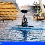 PACMA «El Loro Parque condena a una cría de orca a una vida de sufrimiento»