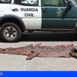 Incautan en Santa Cruz una piel completa de 3,5 metros de longitud de un espécimen de cocodrilo