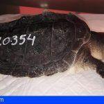 Localizan en el litoral de Adeje una tortuga lora, solo se habían registrado 7 avistamientos en España