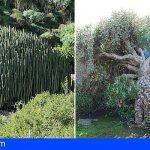 Habilitan un catálogo interactivo sobre la flora singular de Tenerife