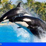 Analizan la personalidad de las orcas por primera vez en la historia