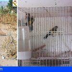 Sorprendido cuando captuba ilegalmente aves fringílidas en una finca de Valle Gran Rey