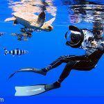 El cámara submarino Rafa Herrero, colaborador de la BBC, Premio `Arona Son Atlántico 2018´