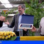 Clavijo destaca los avances del sector del plátano en 2018