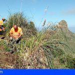 Retiraron en Tenerife 16 toneladas de residuos vegetales de especies exóticas invasoras en noviembre