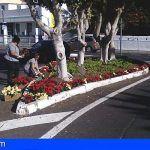 El Ayuntamiento decora San Sebastián de La Gomera con mil quinientas flores de pascua