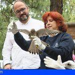 Tenerife | El Centro de Recuperación de Fauna La Tahonilla atendió a más de 4.000 animales en 2018