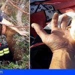 Rescatan a dos cachorros en el interior de una cueva en El Rosario