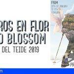 La Campaña del Almendro en Flor 2019 acoge una nueva edición de la Ruta Gastronómica y de Comercios