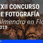 """XXII edición del Concurso de Fotografía """"Almendro en Flor 2019"""""""