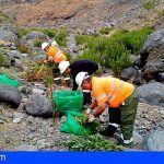 Retiraron en Tenerife 88 toneladas de residuos vegetales de especies invasoras en 2018