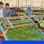 Canarias   Nueva convocatoria de ayudas por 54 millones para modernización de explotaciones agrarias