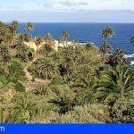 Catalogan más de 2.900 palmeras naturales en el norte de Tenerife