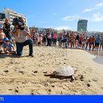 Poema del Mar devuelve una tortuga al océano en la playa de Las Canteras