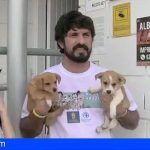 Artistas canarios promueven la adopción responsable de mascotas