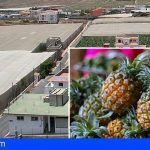 Canarias | Ayudas para nuevos invernaderos o adaptar los existentes a necesidades de cultivos, como la piña