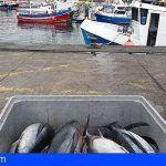 El Gobierno canario eliminará las tasas que pagan los pescadores profesionales en los puertos de la Comunidad Autónoma