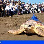 Liberan una tortuga que fue encontrada con el estómago lleno de plásticos