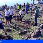 La Gomera impulsa la recuperación del bosque termófilo con la distribución de ejemplares de especies vegetales