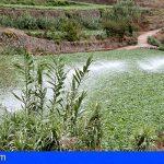 El Gobierno de Canarias concede subvenciones por 6 millones de euros al agua para riego agrícola