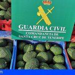 La Guardia Civil esclarece el robo de 1.000 kg de aguacates en Tenerife Norte