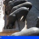 El Cabildo destinará 40.000 a las explotaciones ganaderas de Tenerife
